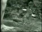 Robin Hood 027 – Trial By Battle - 1956 Image Gallery Slide 2